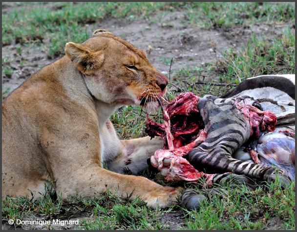 Lion07TZAirNgo