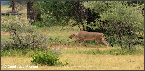 Lion08TZTar