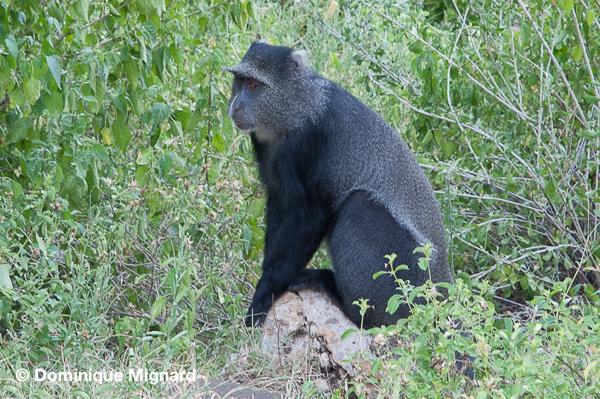 Environs de Manyara