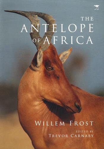 AntAfrica